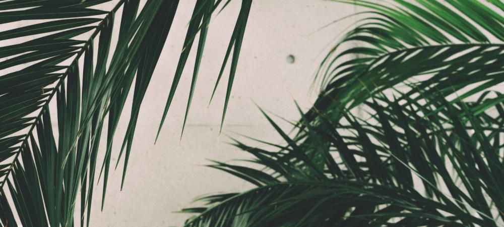 Isaura _ Cabecera blog 3